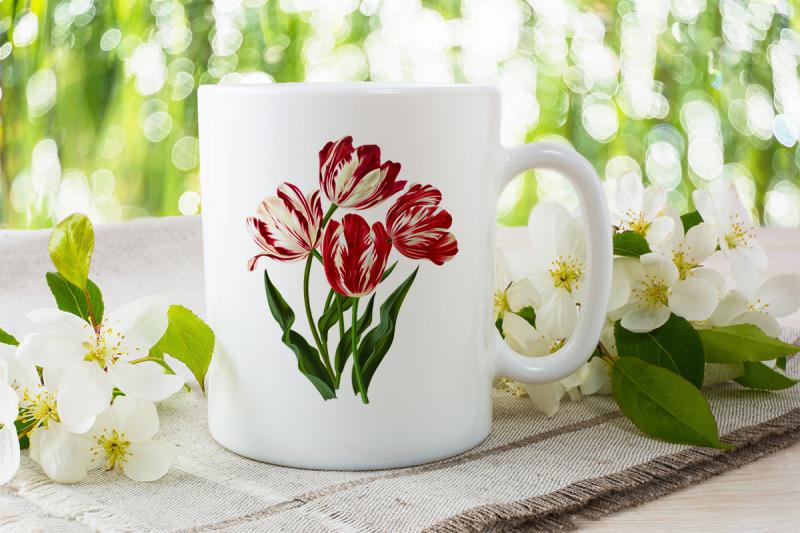 tulip-clipart