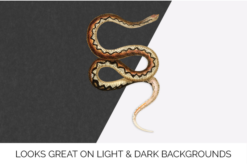 snake-leioheterodon-de-sganzin-vintage-clipart-graphics