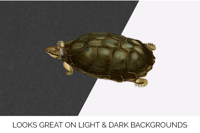 turtle-terrapin-turtle