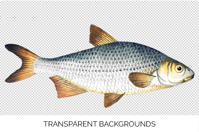 fish-clipart