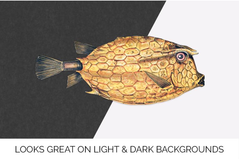 fish-clipart