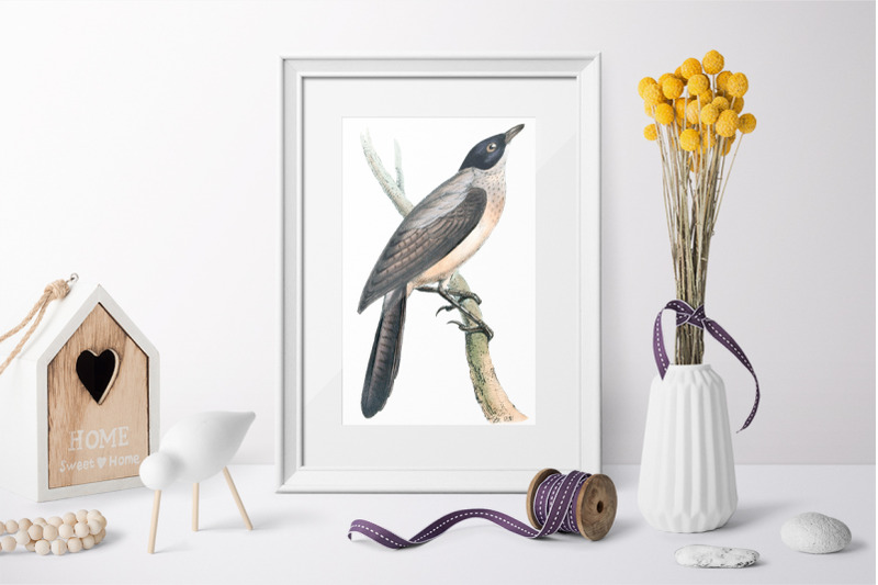birds-black-masked-thrush-vintage-clipart-graphics