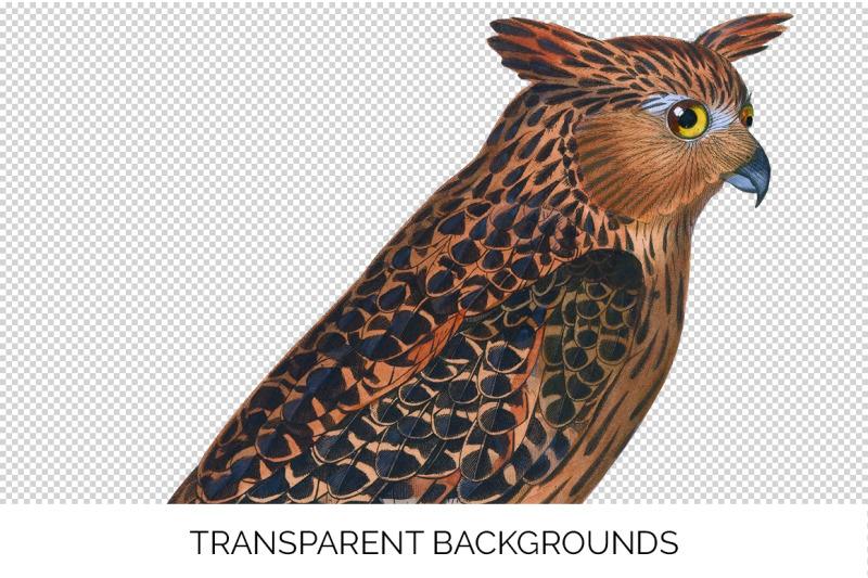 owl-clipart