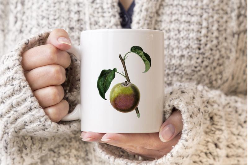 fruit-autumn-bergamot-pear-vintage-clipart-graphics