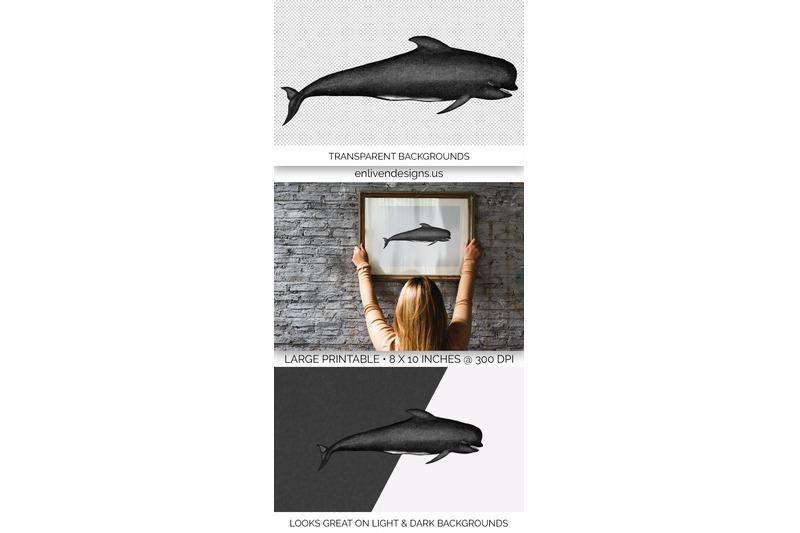 whale-pilot-clipart