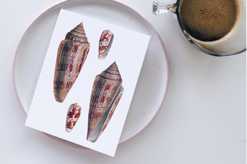 shells-conus-gloria-vintage-clipart-graphics