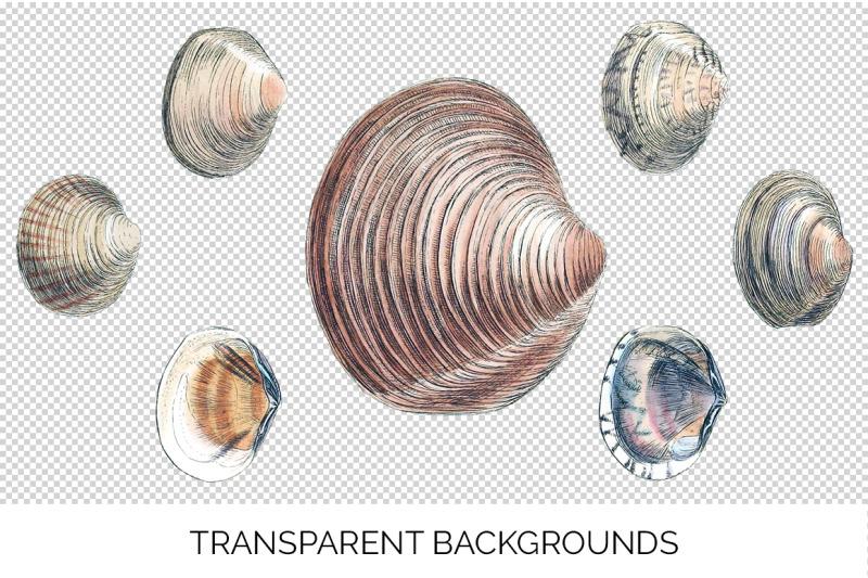 shells-amphidesma-vintage-clipart-graphics