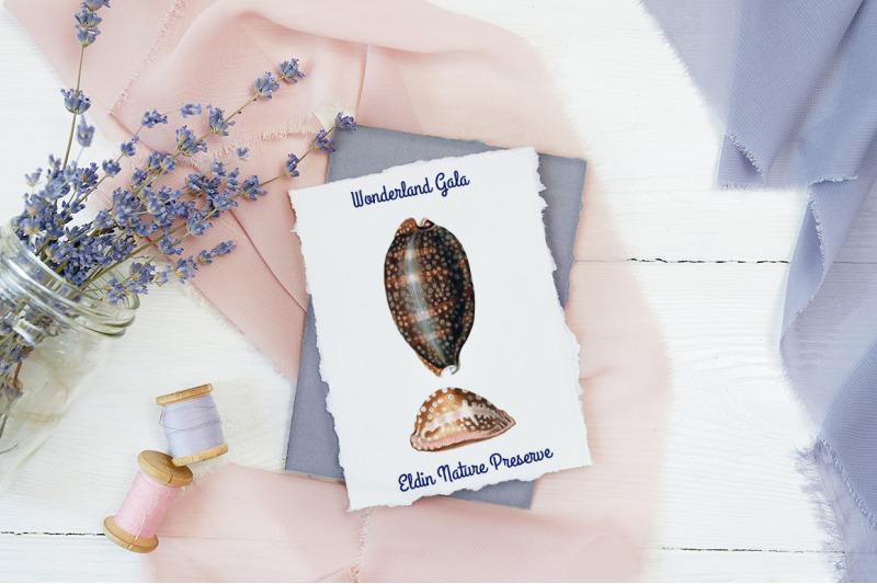 shells-cypraea-shells-vintage-clipart-graphics