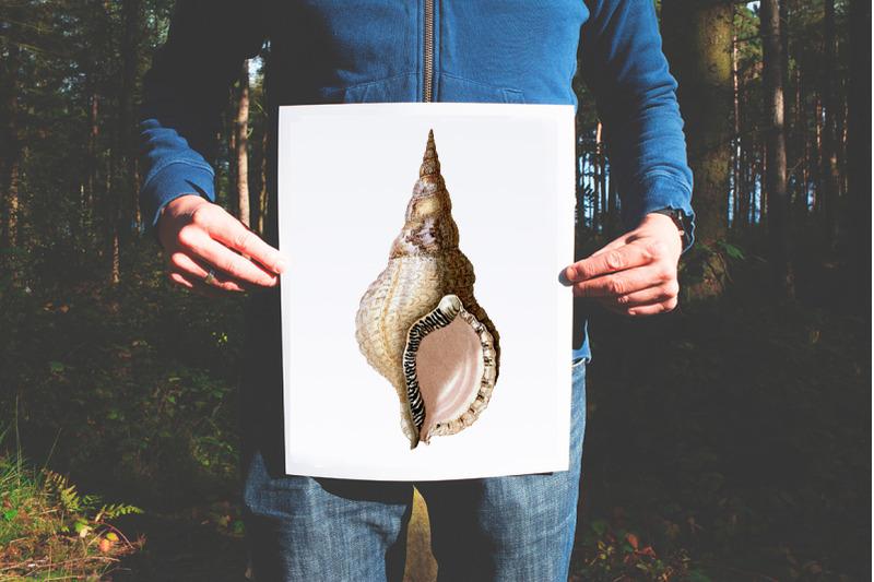 shells-tritons-horn-vintage-clipart-graphics
