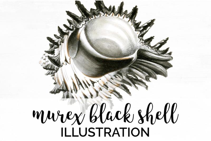 shells-murex-black-shell-vintage-clipart-graphics