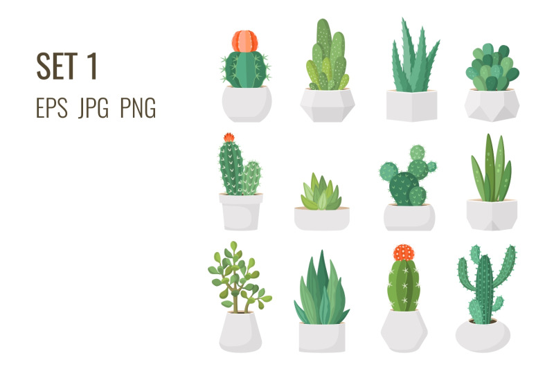 cacti-and-succulents-in-pots