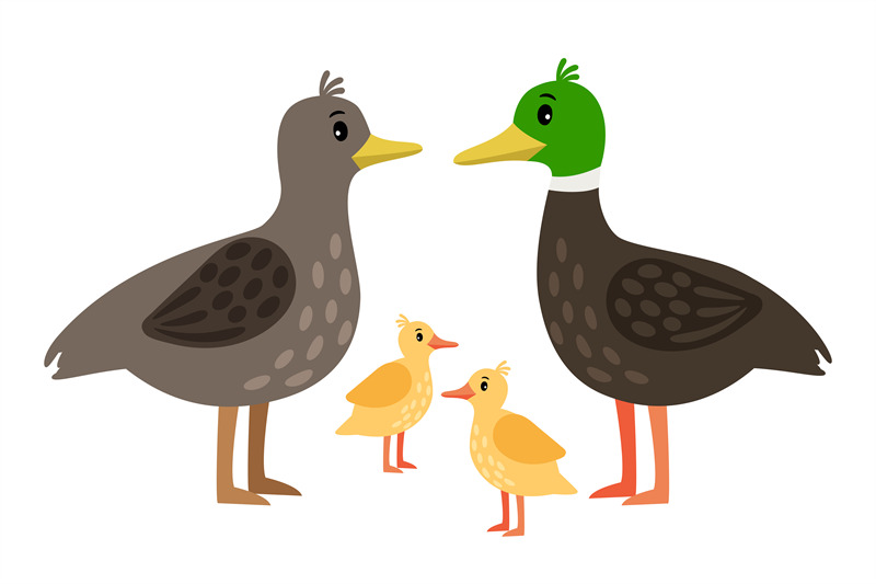 duck-family-vector-mother-duck-drake-and-little-ducklings-isolated-o