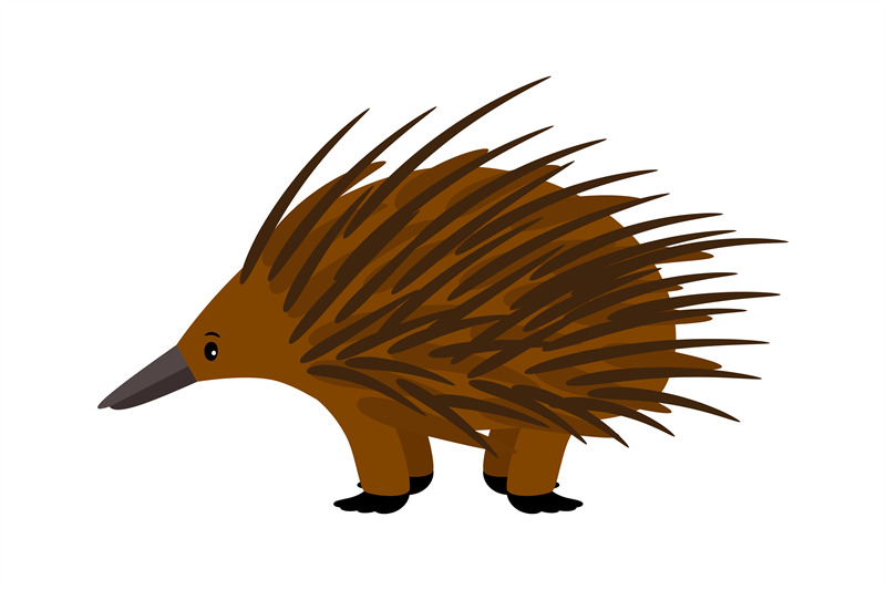 echidna-cute-vector-echidna-character-on-white