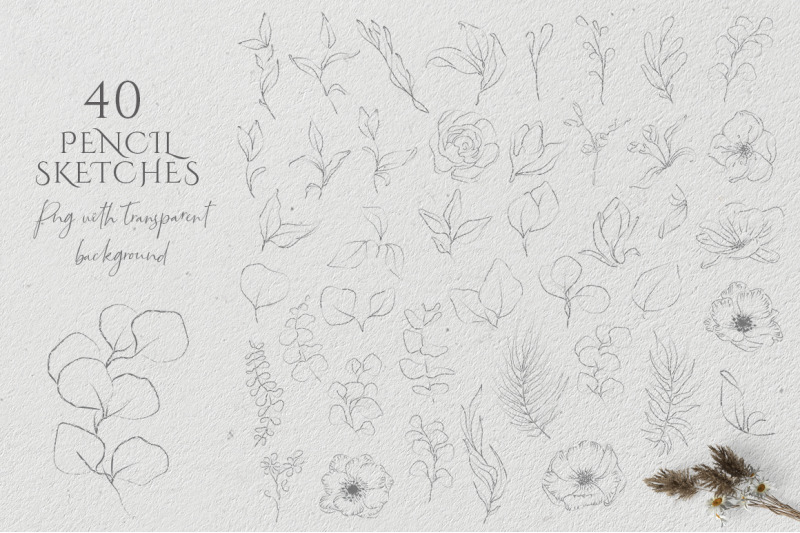 floral-sketch-illustrations-collection