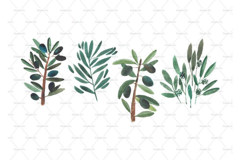 watercolor-olive-branch-clipart-wedding-clipart-logo-branding-eucal