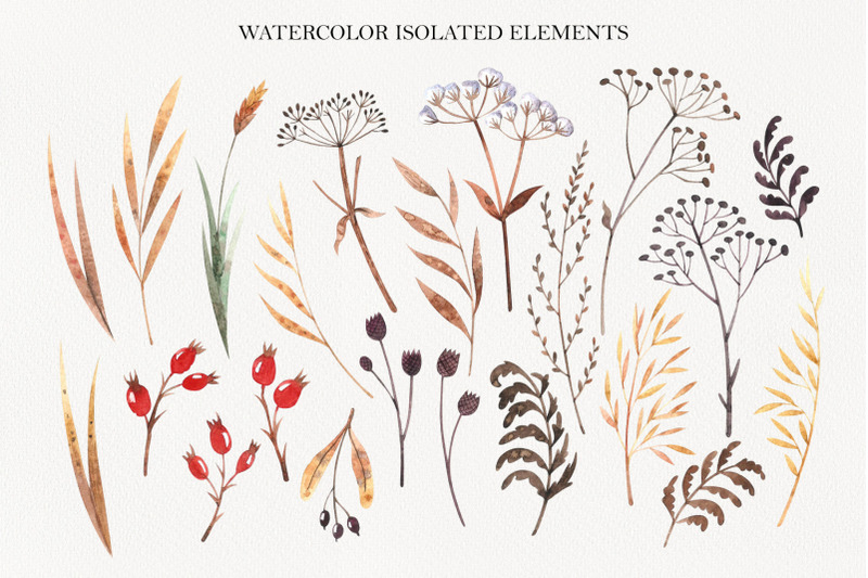 winter-dry-plants