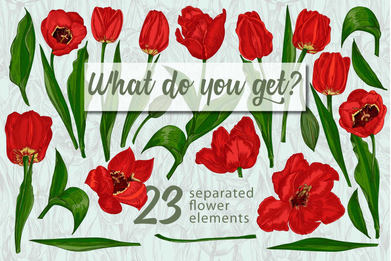 red-tulips-vector-clipart