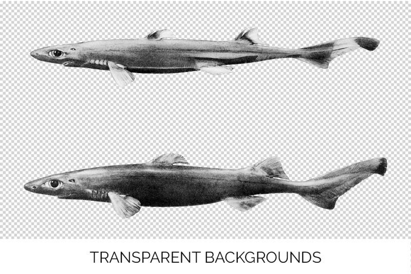shark-clipart-black-dogfish-shark