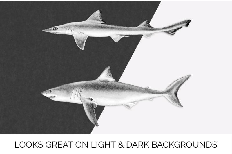 shark-clipart-great-white-shark