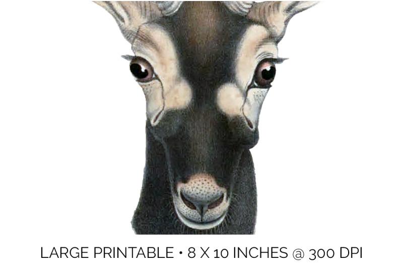 bucks-deer-clipart