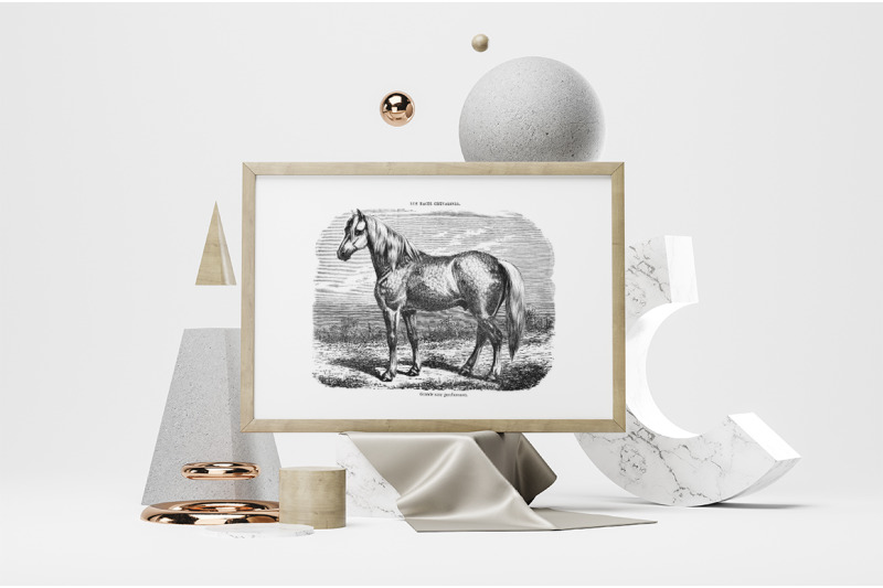 horse-clipart-black-and-white
