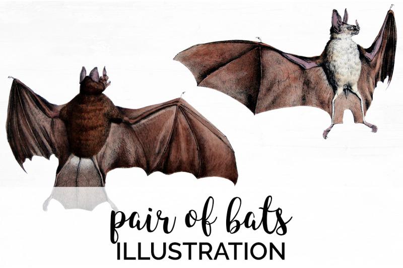 bat-clipart