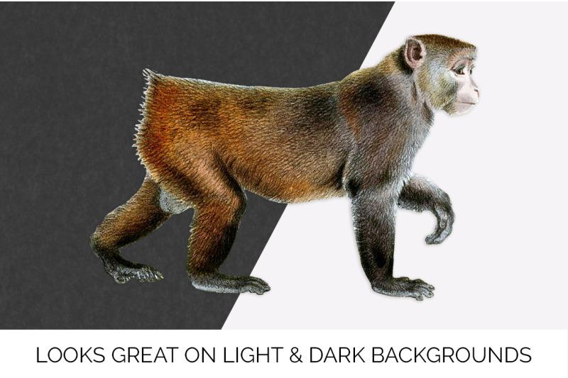monkey-clipart