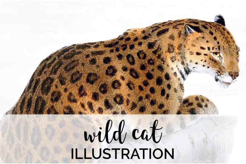 cat-clipart-wildcat