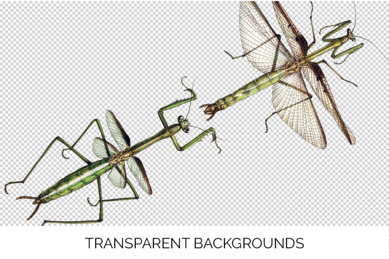 mantis-insect-clipart