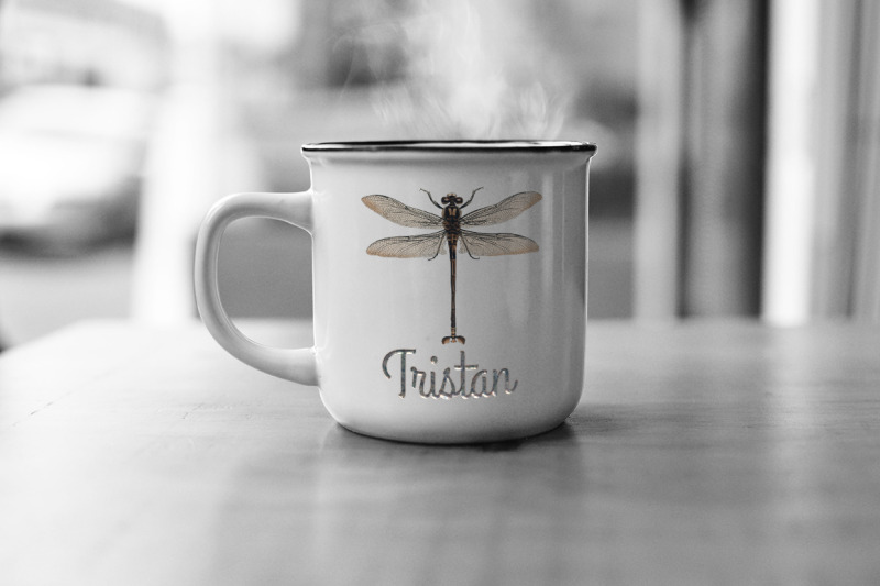 insect-dragonfly-bugs