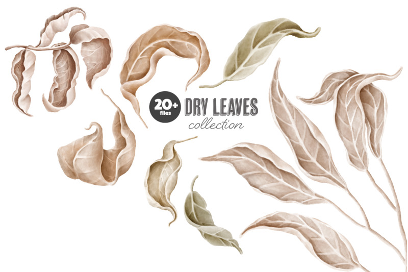 dry-leaves-clipart-collection