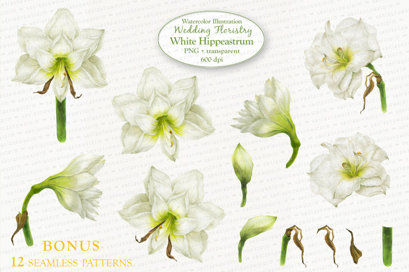 white-hippeastrum-base-elements-for-wedding-floristry