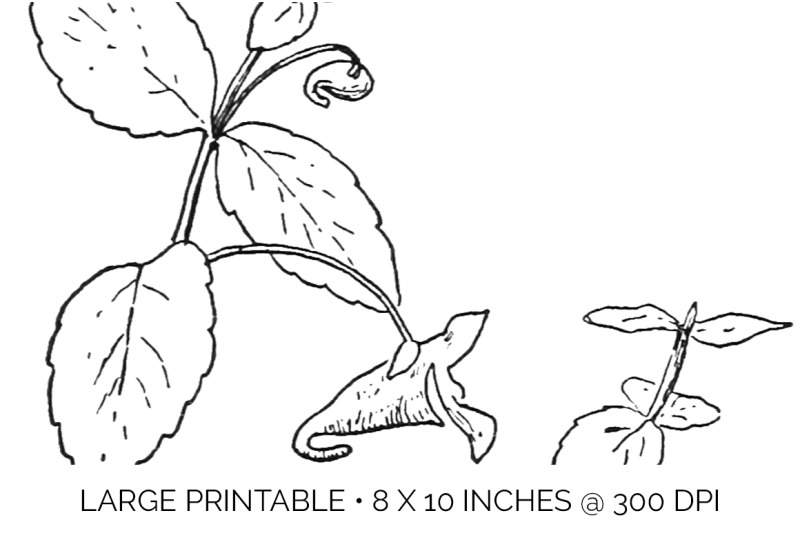 flowers-black-and-white-clipart