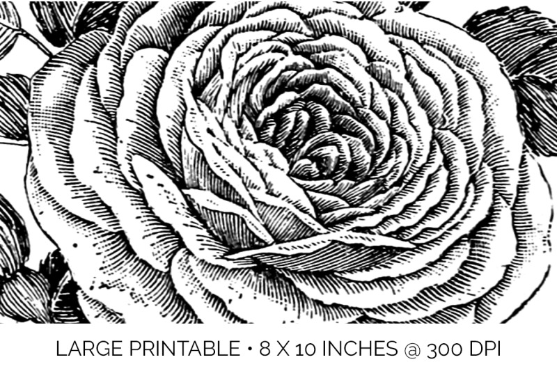 rose-black-and-white-clipart