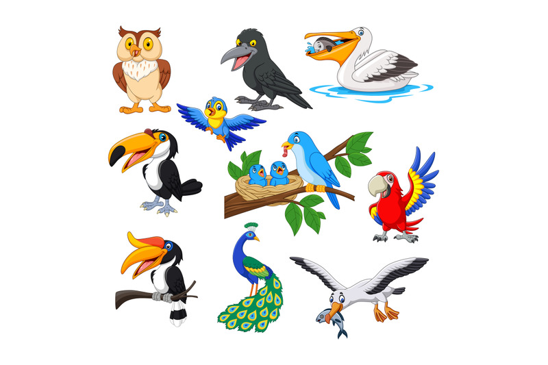 cartoon-bird-collection-set