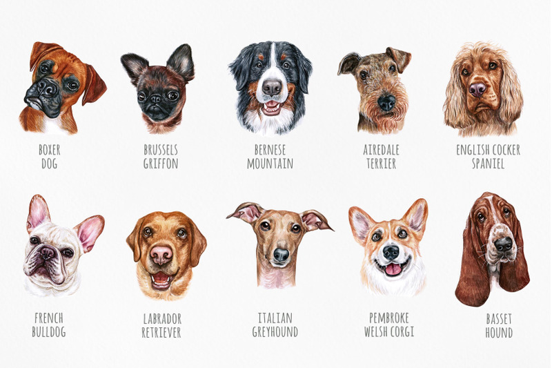part-1-big-watercolor-illustrations-set-dog-breeds