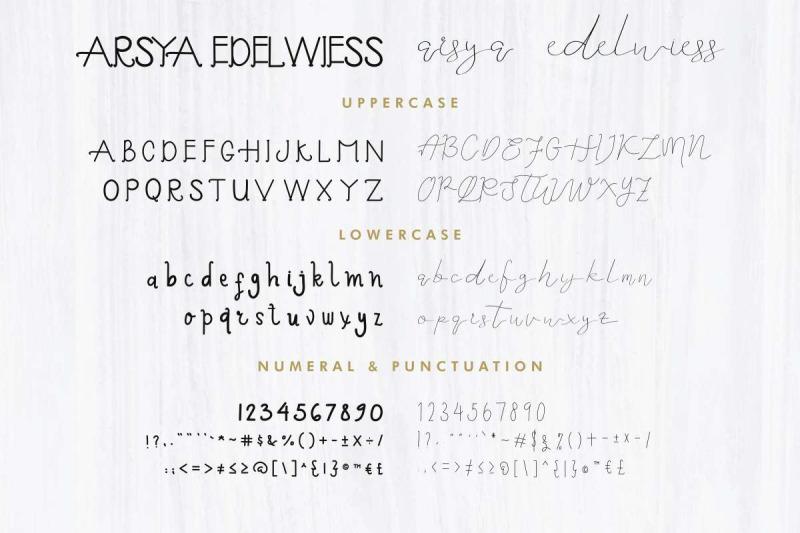 arsya-edelwiess
