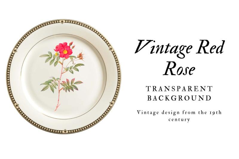 rose-vintage-flowers-botanical-iliustration-vintage-flowers