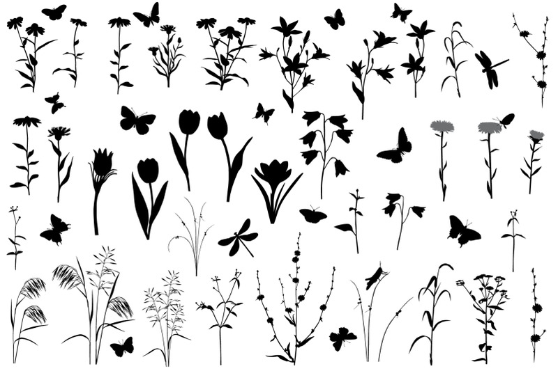 collection-of-plants