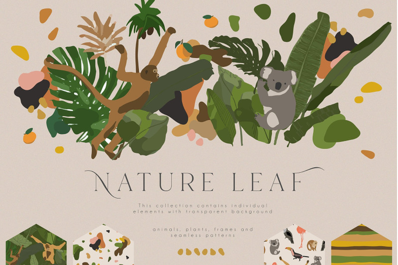 nature-leaf-collection