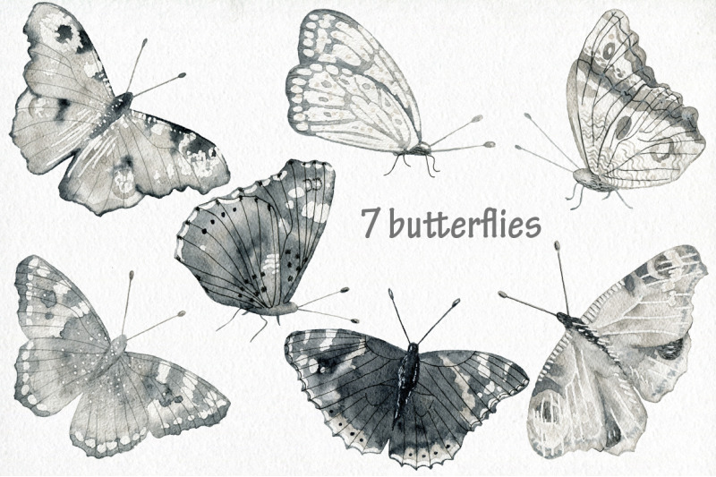 butterflies-and-floral-collection