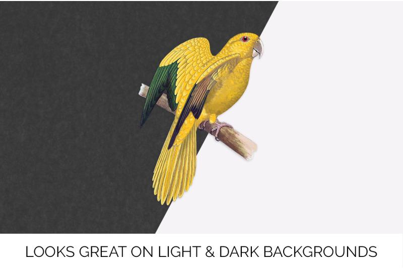 parrot-clipart-golden