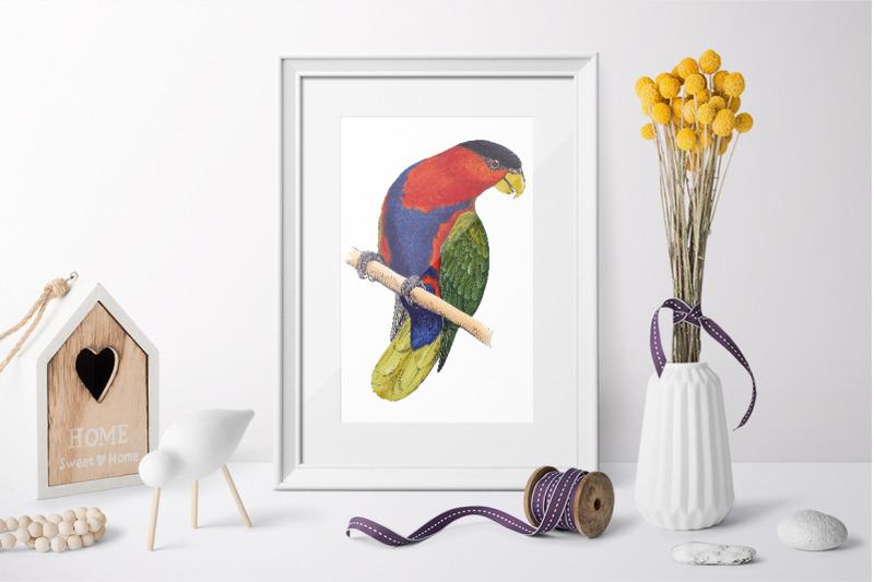 parrot-clipart