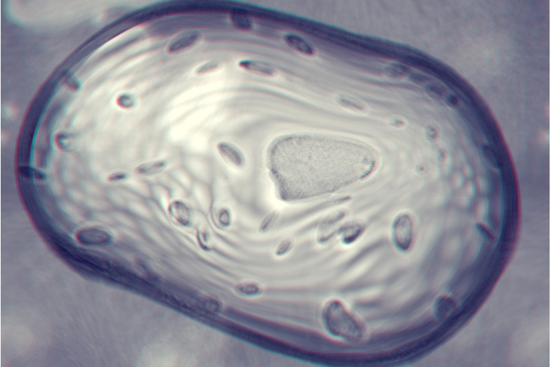 bacteria-cells-backgrounds-2