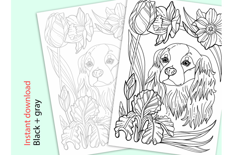 cavalier-king-charles-coloring-page