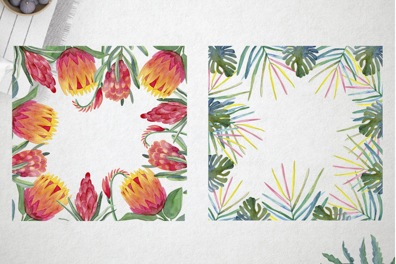 watercolor-protea-set