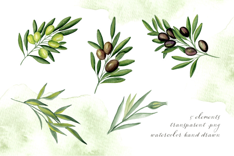 olive-branches-watercolor