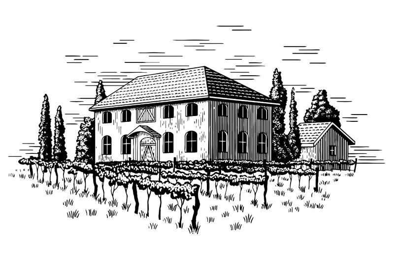 elegant-vineyard