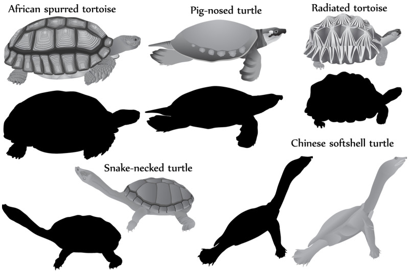 turtles-silhouette-and-black-white