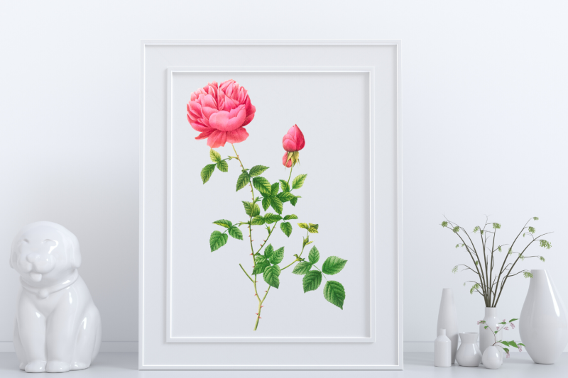 pink-vintage-flowers-botanical-iliustration-vintage-rose